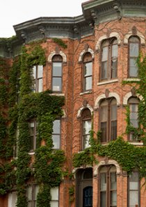 exterior of brick apartment buildings covered with green ivy in Chicago