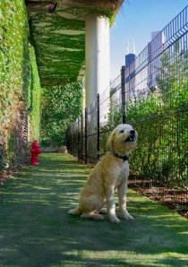 dog sitting on outdoor dog run in downtown Chicago apartment building