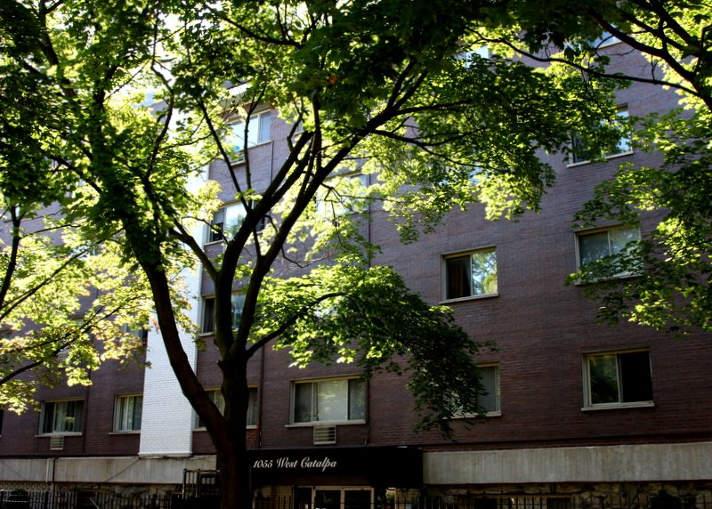 tree in front of lobby of 1055 West Catalpa Apartments in Edgewater Chicago