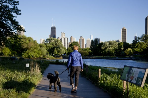 Dog walker at Lincoln Park Zoo lagoon in Lincoln Park Chicago